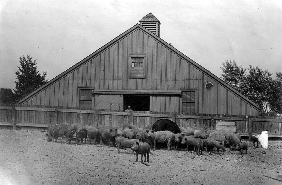 Barns at Buffalo State College